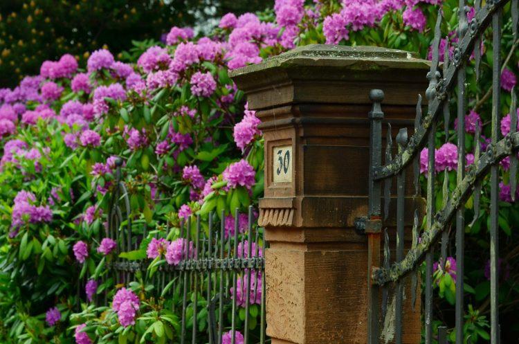 fleurs qui dépassent d'une clôture en fer forgé